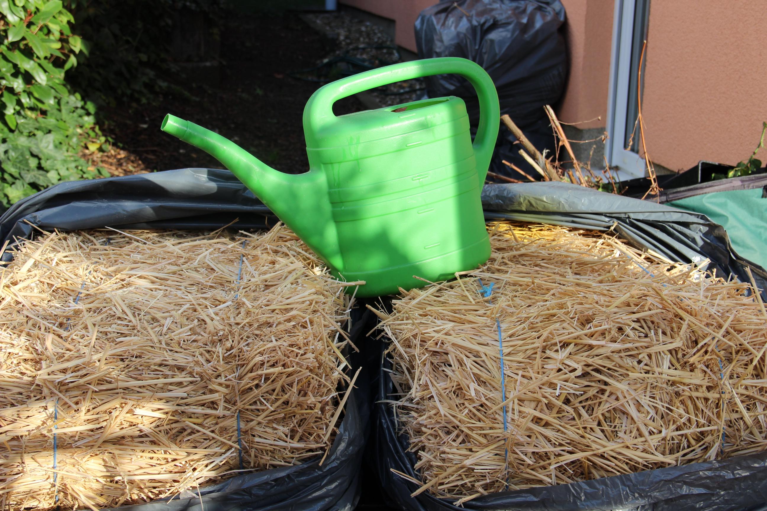gartenschlauch in clever pflanzen auf stroh. Black Bedroom Furniture Sets. Home Design Ideas