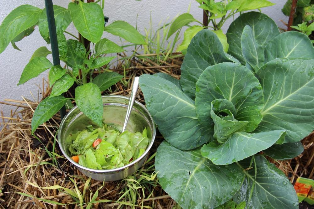 Salat im Strohballenbeet