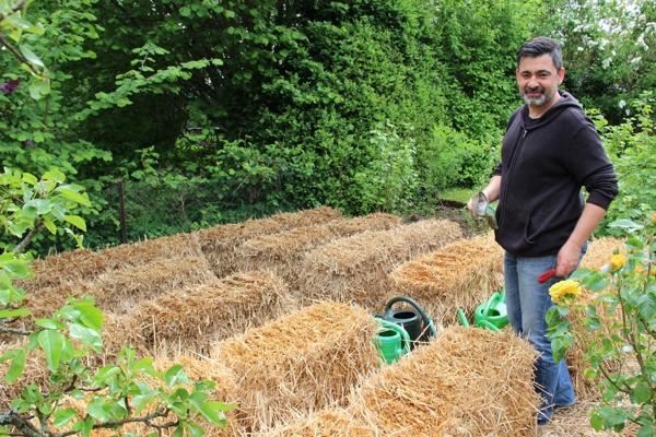 Strohballen Im Schrebergarten Für Den Bio-gemüse Anbau Nutzen Gaertnern Auf Strohballen Gemuese Pflanzen