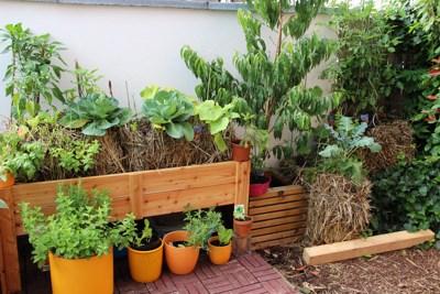 Home - Pflanzen Auf Stroh Gaertnern Auf Strohballen Gemuese Pflanzen
