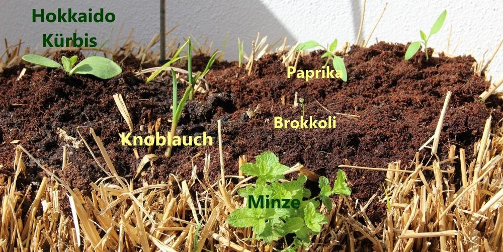 Pflanzen auf Stroh