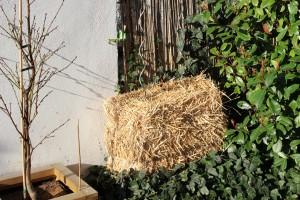 Strohballen gärtnern
