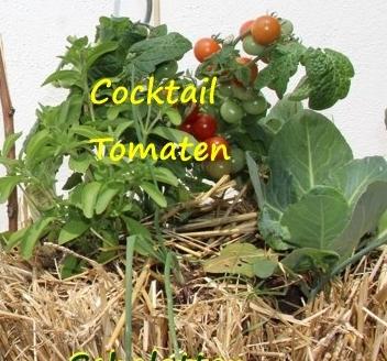 tomaten pflanzen auf stroh. Black Bedroom Furniture Sets. Home Design Ideas