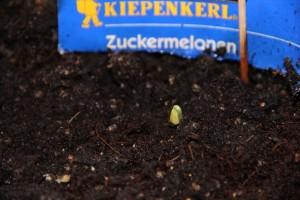 Zuckermelone strohgarten
