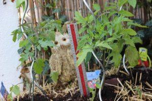 Tomaten wachsen gut im Stroh