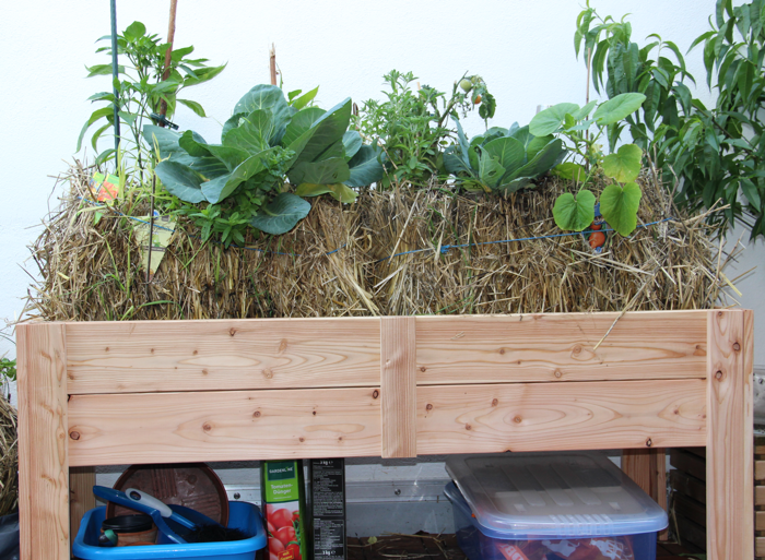 hochbeet mit stroh pflanzen auf stroh. Black Bedroom Furniture Sets. Home Design Ideas