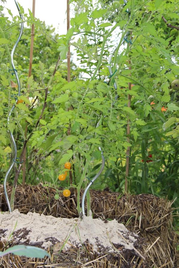 tomate auf sand