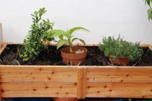 altes Stroh schützt Pflanzen