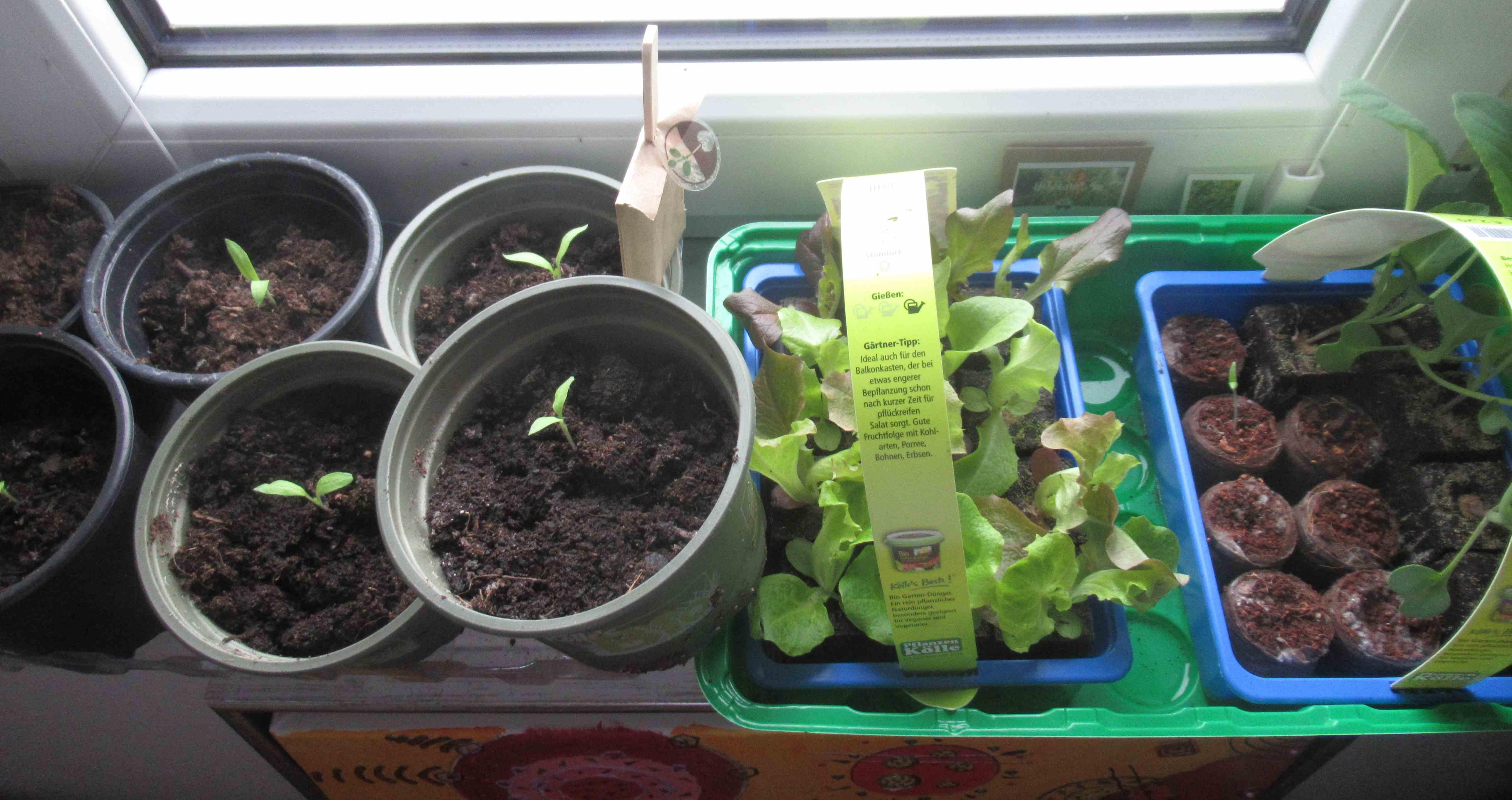 Keime kommen fruchtfliegen auch meine strohballen for Fruchtfliegen pflanzen