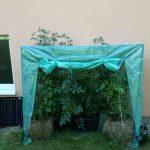 Tomaten auf Stroh im Gewächshaus
