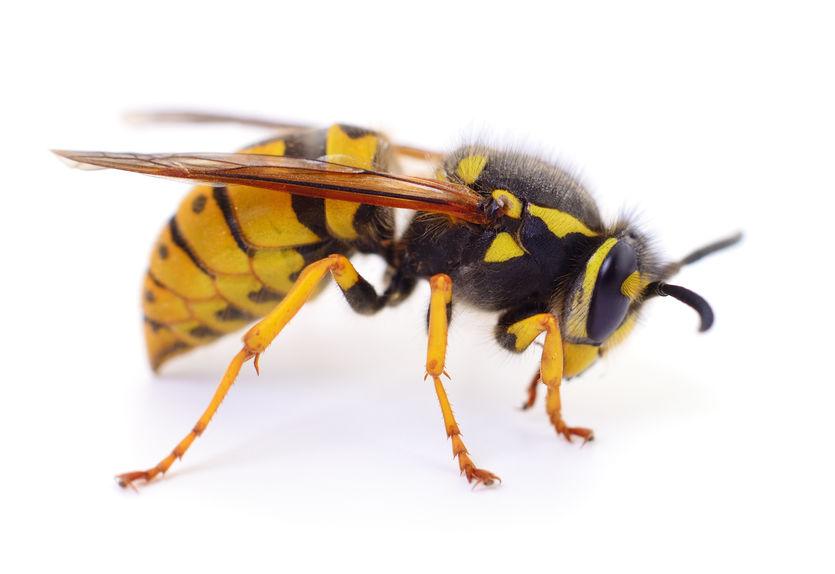 Wespen vertreiben - auch die Insekten brauchen lebensraum.